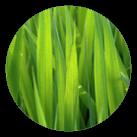 lawn care icon 2